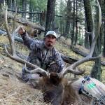 08-montana-bull